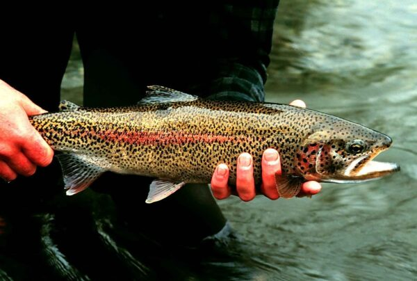 Riverence acquires rainbow trout producer Clear Springs Foods
