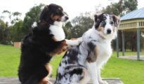 Camp Run-A-Mutt to open new dog daycare and boarding location at Norfolk