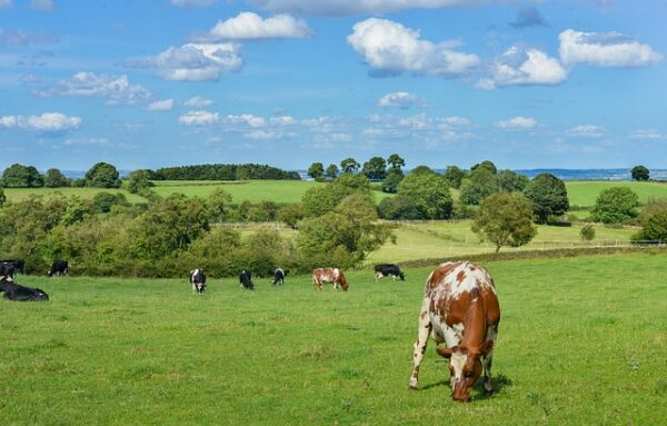New Zealand dairy giant Fonterra to divest China farms for $368m