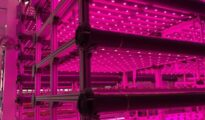 Kalera to open new vertical farming facility in Seattle in 2021