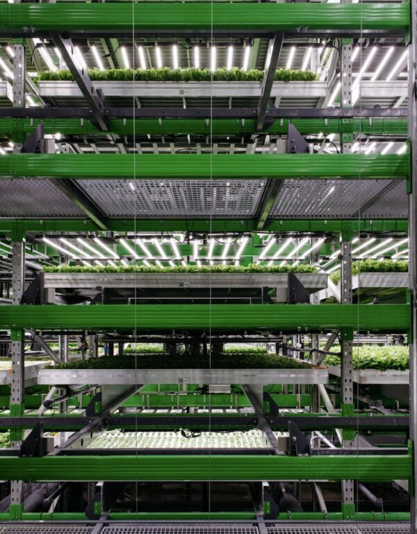 Vertical farming company Bowery Farming secures $300m in new funding round.