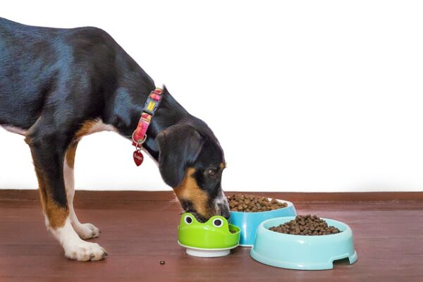 General Mills to acquire pet treats business of Tyson Foods for $1.2bn