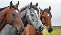 Amwins to acquire equine and canine insurance provider Equisure
